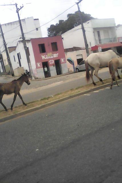 cavalos na julio