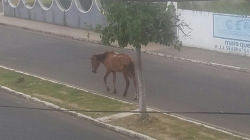 cavalo secao 3